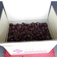 紫宝梅™『ミスなでしこⓇ』10kg