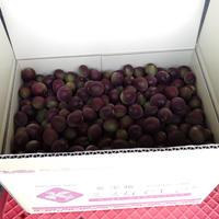 『紫宝梅ミスなでしこⓇ』青梅【10kg】※送料別