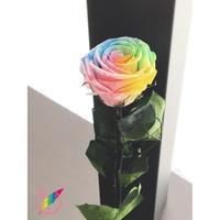 【送料無料】プリザーブドフラワー レインボーローズ茎までプリザーブドフラワーの1輪挿し:パステル