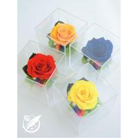 【送料無料】プリザーブドフラワー レインボーローズ :ClearBox:クリアボックス 4カラー