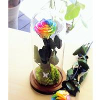 「名入れギフト」プリザーブドフラワー レインボーローズ ''Rainbow Dome'' ガラスドーム レインボーローズ茎までプリザーブドフラワー