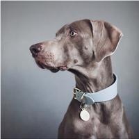 [Collar of Sweden] Grey Wide M/L/Martingale M