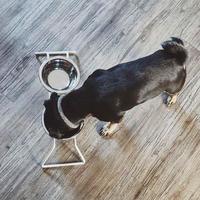 [MiaCara]  Dog Feeder  コンクリートグレー