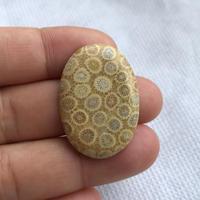フォッシルコーラル(No.8)/天然石ルース(裸石)