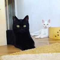 月々3000円 レモン猫 足長おじさん定期サポーター