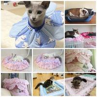 ねこ館の TOP MODELS達 Part6