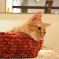 モコモコ毛糸の猫ボウル