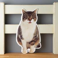 猫のかたちポストカード シマジロウ