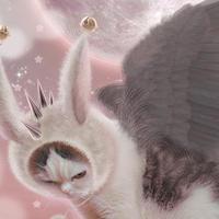 猫託ポストカード「月夜も十五夜、闇夜も十五夜」2枚セット