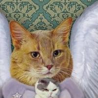 猫託ポストカード「猫託」2枚セット