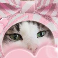 猫託ポストカード「心配は身の毒」2枚セット