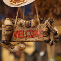 The Prairie Schooner  Rattle Snake Welcome Sigh