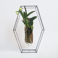 「ガラスと着生植物」Cattleya Jairak Doll