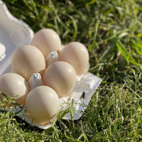 《数量限定》鴨の卵 完全無農薬 6個パック