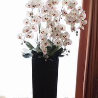 TioTio Flower 胡蝶蘭8本立て(完成品)