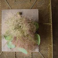 野の花屋 スモークツリーのスクエアウッドプレート