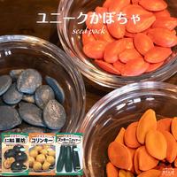 ユニークかぼちゃセット / 送料込 種セット17g ギフト