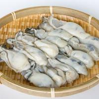 【期間限定販売】【セットにプラス】追加で10! 牡蠣と青ネギの餃子  10ヶ