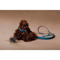 Dog Choker  S size  (ドッグチョーカー S サイズ)