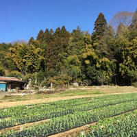 【 1年コース】農人たち7周年記念フレンズパック(送料込)