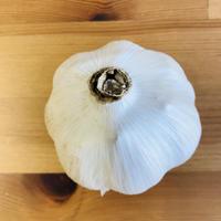 乾燥にんにく1玉(田中農園:印内)