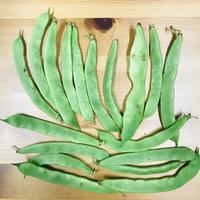 モロッコインゲン1袋(三須トマト農園:船橋市印内)