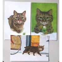 町田尚子:ポストカード「キジトラ」3種