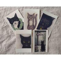 坂本千明ポストカードセット:猫B(5枚)