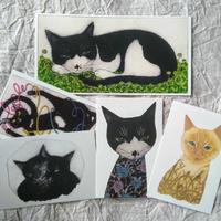 坂本千明ポストカードセット:猫A(5枚)