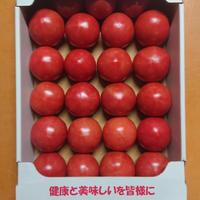 【順次発送】秋穂とまと(Mサイズ)4Kg×1箱