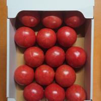 【順次発送】秋穂とまと(2Lサイズ)4Kg×2箱