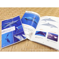 小笠原のミナミハンドウイルカ 個体識別カタログ2020   Indo-Pacific bottlenose dolphins in Ogasawara