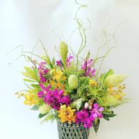 <上品な蘭(ラン)花>生花アレンジメント <タテ60×ヨコ45>
