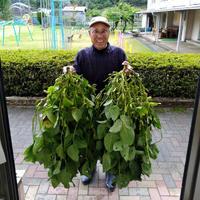 【10月限定】丹波篠山おくも村の黒枝豆1.1kg(枝付き箱入)
