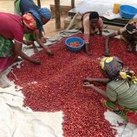 Rwanda Nyarusiza CWS ルワンダ ニャルシザ ウォッシュド 100g