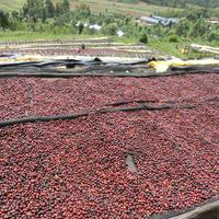 Rwanda Nyarusiza CWS ルワンダ ニャルシザ ウォッシュド 225g