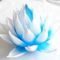 [04]したくや縁  不空の蓮  青色青光(しょうしきしょうこう)淡色 ギフトパッケージ