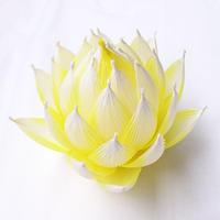 [04]ハス 黄色黄光(おうしきおうこう)淡色