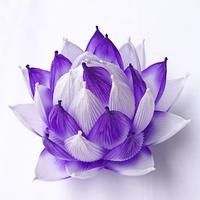 [04]ハス 紫雲(しうん)