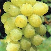 ぶどう 種なし 翠峰 3kg