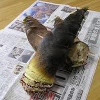 境川 新春筍(2本)と山菜のセット