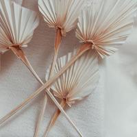 パームリーフスペードカット select flower