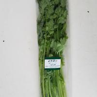 パクチー個包装品 100g ×10袋 (税・送料込み  *北海道・九州・離島はプラス300円)