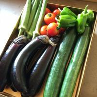 おおきな樹の畑「季節の野菜セット」2000円分 ※要冷蔵便