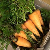 おおきな樹の畑「季節の野菜セット」1000円分 ※要冷蔵便