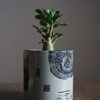 JUN KANEKO  鉢と植物・I