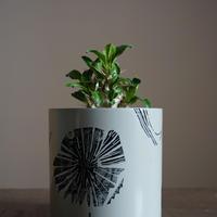 JUN KANEKO  鉢と植物・B