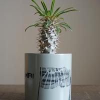 JUN KANEKO  鉢と植物・C