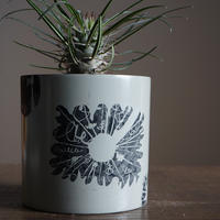 JUN KANEKO  鉢と植物・F