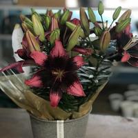 発送専用【Pot Lilies】2020母の日早期ご予約割引商品  ラッピング・箱代込み